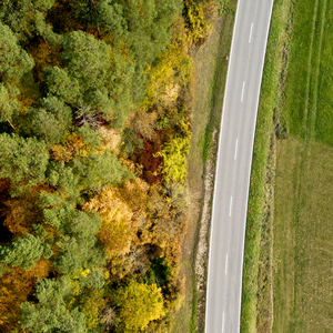 Country road with fall foliage from above
